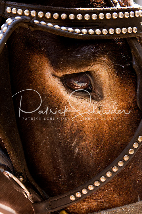 Close up photo of a horse at Charleston Place in Charleston, SC.