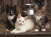 Carl, ANIMALS, photos(SWLA146,#A#) Katzen, gatos