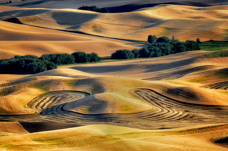 Cut rows of lentil beans and road. The Palouse. Washington