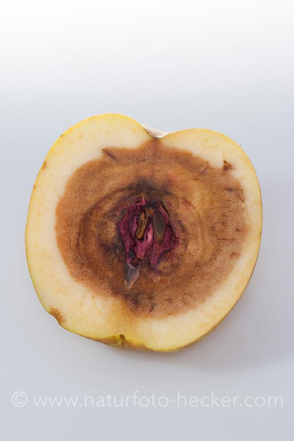 Apfel, fauler Apfel, Fäulnis, Fäule, Apfelfäulnis, Kernhausfäule, Kernhaus-Fäule, faules Kerngehäuse, Fusarium-Fäule, Schadpilz, Fusarium. Apple, rottenness, rotten, apple core