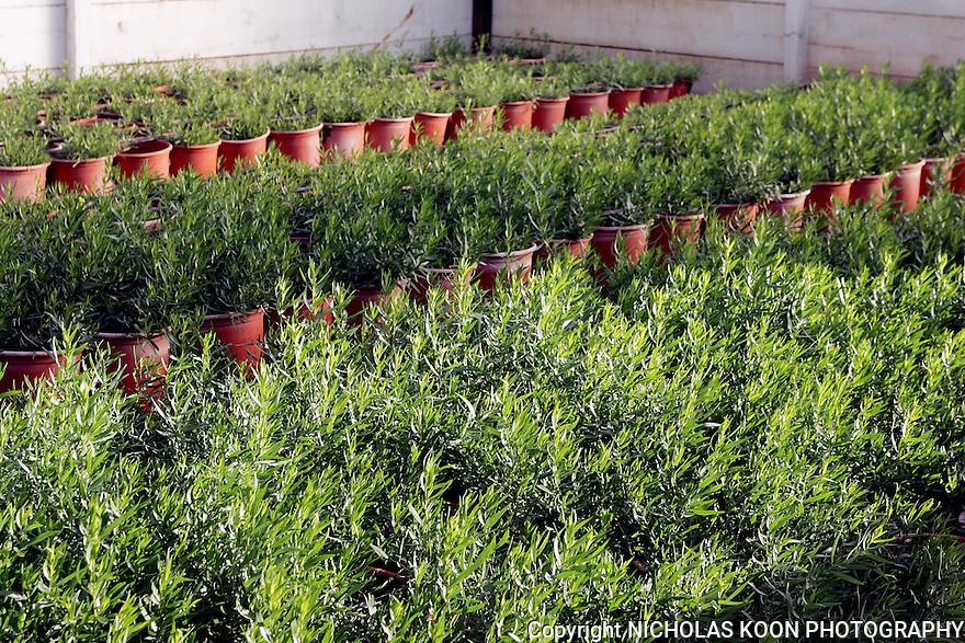 Herb Thyme Farms, California.