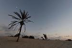 Israel, Southen Coastal Plain. Palm tree at Nitzanim beach