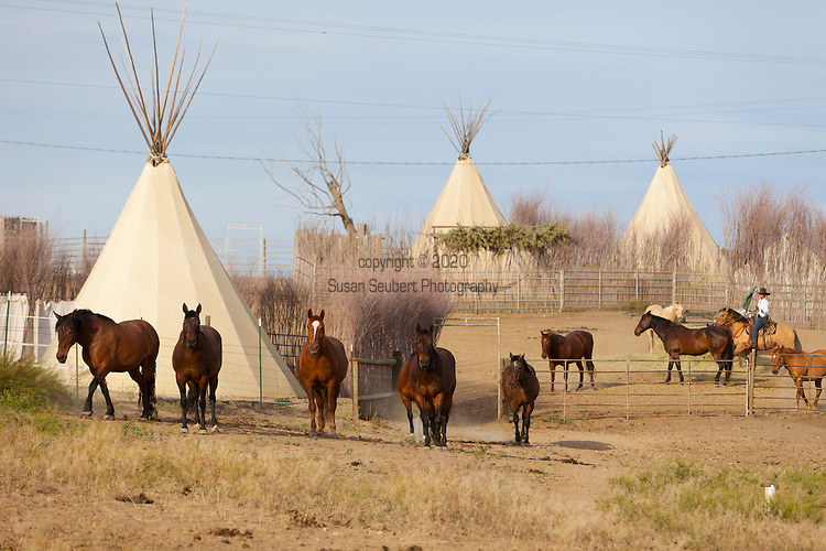 The Cherry Wood Bed, Breakfast and Barn features luxury teepees and horse rides.