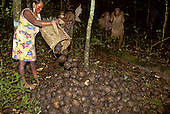 A-Ukre village, Brazil. Kayapo women collecting Brazil nuts in the forest; red and black body paint; Xingu Reserve.