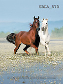 Bob, ANIMALS, collage, horses, photos(GBLA570,#A#) Pferde, caballos