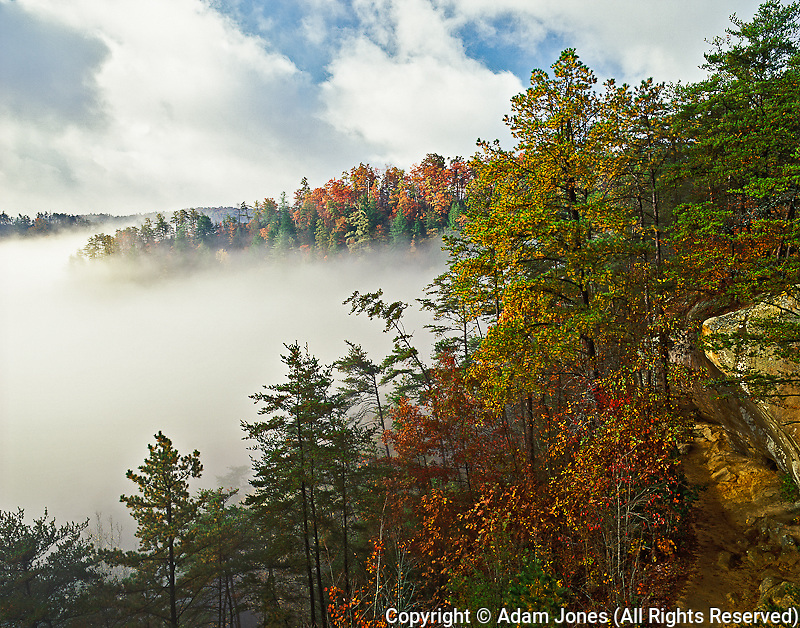 Mist at sunrise among ridges in autumn colors, Auxier Ridge, Red River Gorge Geological Area, near Slade, Kentucky