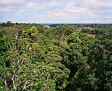 PERU, Amazon Rainforest, South America, Latin America, view of an Amazon rainforest with cloudy sky