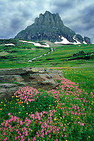 Lewis monkeyflower and Clements Mountain<br /> Logan Pass<br /> Glacier National Park<br /> Rocky Mountains,  Montana