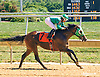 Tappindaddy winning at Delaware Park on 9/12/16