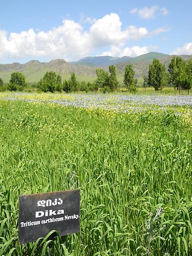 Ökolandbau in Georgien: Murad Gogoladze und seine Felder und Produkte / Organic Farming in Georgia: Murad Gogoladze, his fields and his produce