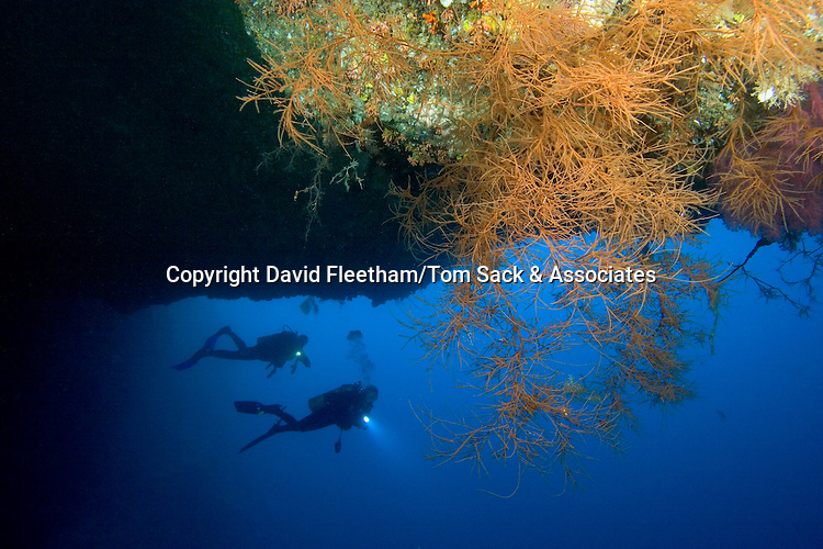 Divers (MR) and black coral in Blue Hole, Palau, Micronesia.