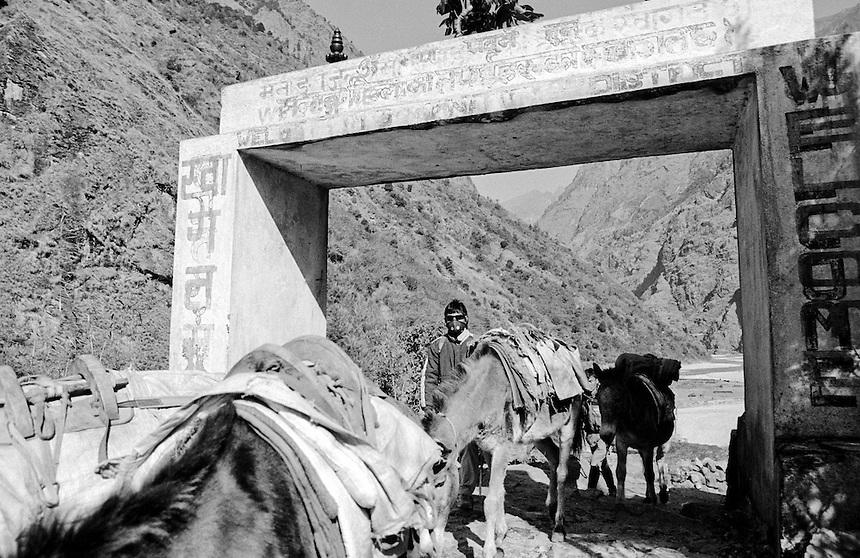 A donkey train moves downhill with its guide in the Annapurna Himal, Nepal, 2008. Donkeys are still used widely in Nepal, carrying goods well beyond the reach of roads and cars. Photo: Ed Giles.