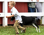 Logan Rabida, 4, of East Windsor, runs back excited with his goat Lilly and his 5th place ribbon he just won, during the annual Four Town that concluded it's four day run on Sunday, Saturday, Sept. 14, 2019, in Somers. (Jim Michaud / Journal Inquirer)
