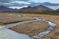 Teklanika river, Denali National Park, Interior, Alaska.