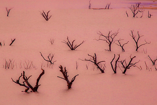 Dead trees appear above the surface of Lake Isabella during the dry season at the Walker Pass, California