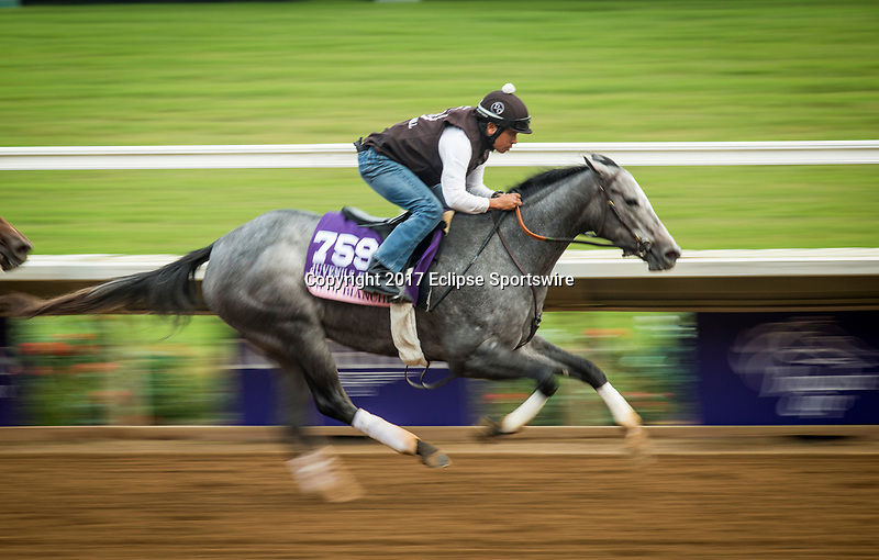 DEL MAR, CA - OCTOBER 27:  Piedi Bianchi, owned by Nice Guys Stables, Jack Bick & Jay Oringer and trained by Doug F. O'Neill, exercises in preparation for the 14 Hands Winery Breeders' Cup Juvenile Fillies  at Del Mar Thoroughbred Club on {mothname} 27, 2017 in Del Mar, California. (Photo by Alex Evers/Eclipse Sportswire/Breeders Cup)