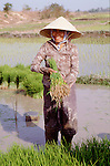 (95/17/20)-Ban Nanath-Vientiane-Laos/Lao PDR - February 07, 1995 -- A woman / rice farmer on her plot with rice seedlings; FNS/SAN, agriculture, rural -- Photo: © HorstWagner.eu