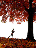 "Lauren Goss, a freshman at Clemson University, runs under a maple tree bursting with autumn colors Thursday on Perimeter Road in Clemson. The Charleston native says she runs two laps around campus everyday to stay fit. ""I can't gain the freshman 15,"" she said."