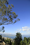 Israel, Lower Galilee, Switzerland forest overlooking the Sea of Galilee and Tiberias