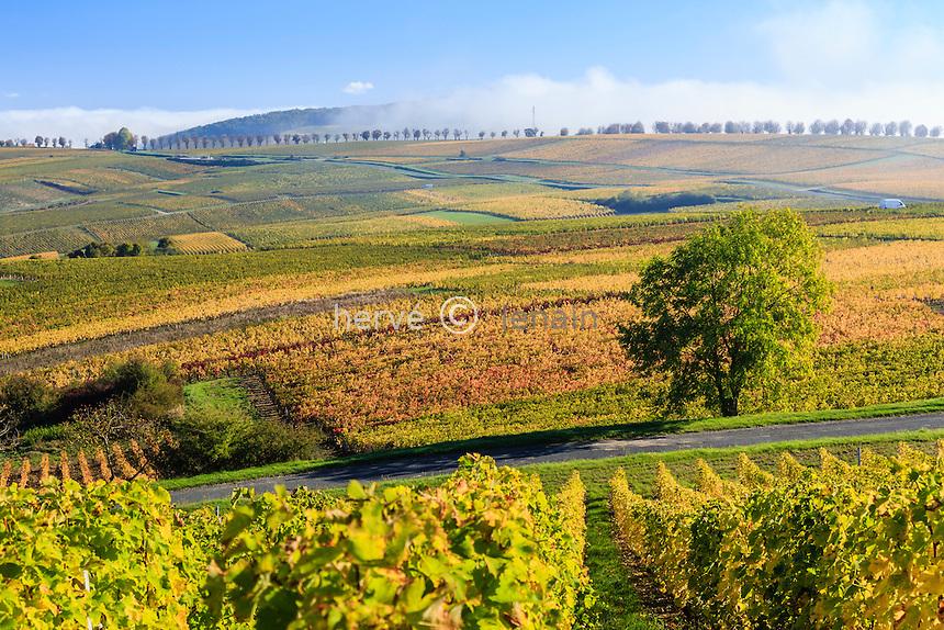 France, Cher (18), région du Berry, Sancerre, le vignoble en automne et brumes matinales // France, Cher, Sancerre, the vineyard in autumn, morning fog