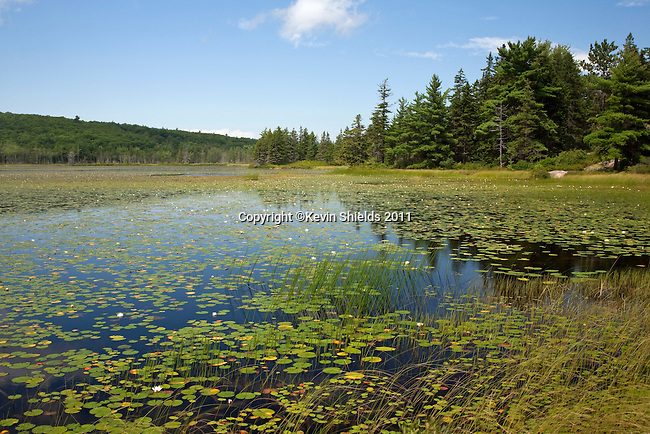 Aunt Betty Pond in late Summer, Acadia National Park, Maine, USA