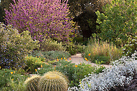 A mix of California  Native Plants and Garden