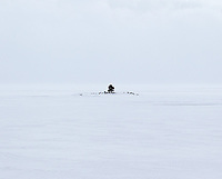 A tree sits on a small island in the middle of a frozen expanse of Yellowstone Lake.