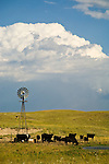 Afternoon thunder storm over Aermotor windmill and grazing black cattle in the Sand Hills of Nebraska.
