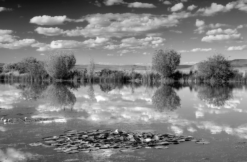 Clouds reflected in pond at Summer Lake Inn. Oregon
