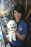 Bichon Frise puppy at the Pet Centre, Boyne Shopping Centre, Drogheda...Photo NEWSFILE/Jenny Matthews.(Photo credit should read Jenny Matthews/NEWSFILE)....This Picture has been sent you under the condtions enclosed by:.Newsfile Ltd..The Studio,.Millmount Abbey,.Drogheda,.Co Meath..Ireland..Tel: +353(0)41-9871240.Fax: +353(0)41-9871260.GSM: +353(0)86-2500958.email: pictures@newsfile.ie.www.newsfile.ie.FTP: 193.120.102.198.