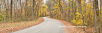 63995-00908 Road in fall, Brown County State Park, IN