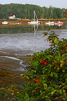 Apple Tree overlooking Bass Harbor  #S15