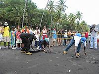 local communities help save leatherback sea turtle hatchlings, Dermochelys coriacea, Dominica, West Indies, Caribbean, Atlantic