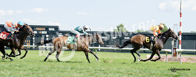 Buttercup Bay winning thru at Delaware Park on 7/30/14