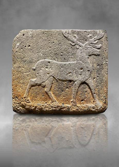 Hittite monumental relief sculpted orthostat stone panel from Water Gate Basalt, Karkamıs, (Kargamıs), Carchemish (Karkemish). 900-700 BC . Stag. Anatolian Civilisations Museum, Ankara, Turkey. With his large and many branched antler, he walks towards the right. <br /> <br /> On a grey art background.