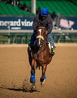 LOUISVILLE, KY - MAY 02: Gormley gallops in preparation for the Kentucky Derby at Churchill Downs on May 02, 2017 in Louisville, Kentucky. (Photo by Alex Evers/Eclipse Sportswire/Getty Images)