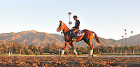 Dry Summer, trained by Jeff Mullins, exercises in preparation for the upcoming Breeders Cup at Santa Anita Park on October 30, 2012.