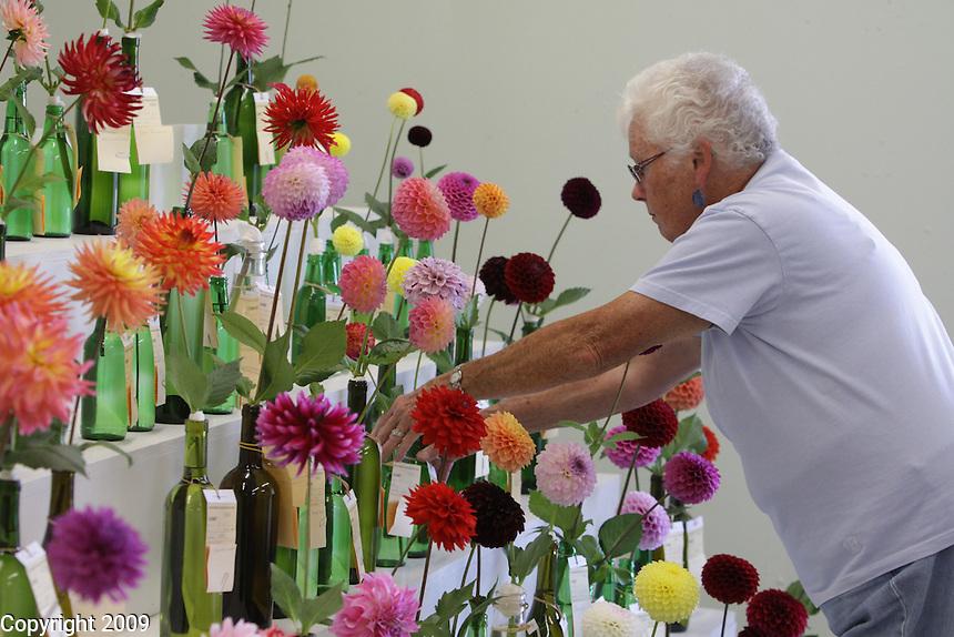 Kay Porter arranges Dahlias at the NW Washington Fair. August 16, 2009 PHOTOS BY MERYL SCHENKER