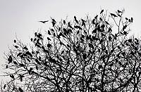Nederland - Den Haag -  Februari 2019.  Vogels in een boom.   Foto Berlinda van Dam / Hollandse Hoogte