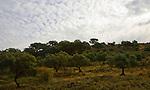 Mackerel sky clouds and trees in Sierra de Grazalema natural park, Cadiz province, Spain