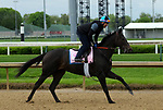 April 26, 2019 : Serengeti Empress works out at Churchill Downs, Louisville, Kentucky, preparing for a start in the Kentucky Oaks. Owner Joel Politi, trainer Thomas M. Amoss. By Alternation x Havisham (Bernardini)  Mary M. Meek/ESW/CSM