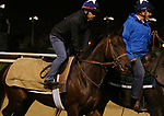 November 01, 2018 : Chalon in preparation for the Breeders' Cup on November 01, 2018 in Louisville, KY.  Candice Chavez/ESW/CSM