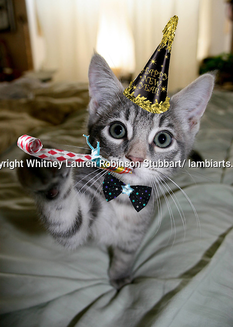New Years Animal Images Photographs