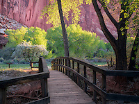 Cottonwood trees and rock formations with bridge at Merin Smith Place. Fruita, Capitol Reef National Park, Utah,