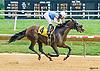 Tempietto winning at Delaware Park on 8/6/16