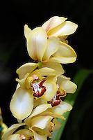 Flor Orquídea. SP. Foto de Juca Martins.