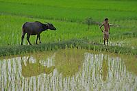 On the road from Battambang  to Phnom Penh, Cambodias rural area