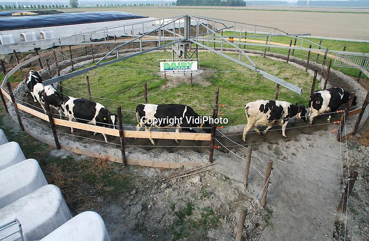 Foto: VidiPhoto..LELYSTAD - Dikke en zwangere koeien lopen tot en met september iedere dag 5 kilometer in een stapmolen om in conditie te blijven. Dat gebeurt op de proefboerderij Waiboerhoeve van de Wageningen UR bij Lelystad. In totaal gaat het om 32 koeien die per toerbeurt aan de zwangerschapsgym gaan. Projectleider Roselinde Goselink probeert met de zojuist gestarte proef aan te tonen dat een goede conditie van (droge) koeien voor de bevalling een gunstig effect heeft op de melkproductie na het afkalveren. Een veehouder zou dan in de praktijk koeien kunnen stimuleren tot meer beweging door voer- en drinkbak uit elkaar te zetten en/of weidegang te bevorderen..