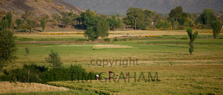 Agricultural workers in fields below Aravalli  mountain range at Nimaj, Rajasthan, Northern India