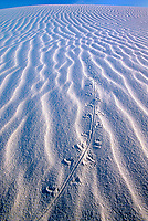 796650045 animal tracks add to the low angled light dune ripple patterns in the white gypsum dunes of white sands national monument in new mexico